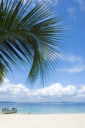 blue beach with coconut on foreground Stock Photo - 3569694