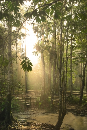 rain forest with fogs and misty lights early in the morning  写真素材