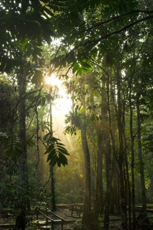 misty forest: rain forest with fogs and misty lights early in the morning  Stock Photo