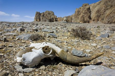 skull of a dead animal photo