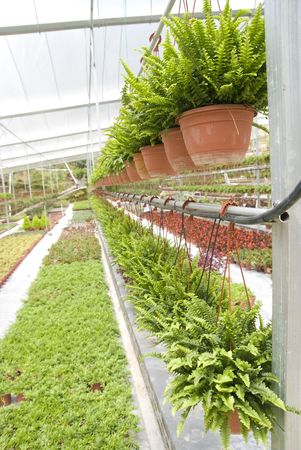 nusery garden agriculture industry plantation   photo