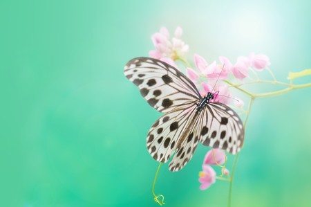 close up photos of butterfly with ray of lights Stock Photo