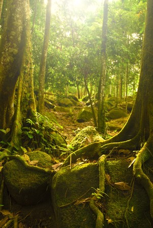 natural green forest with ray of lights photo