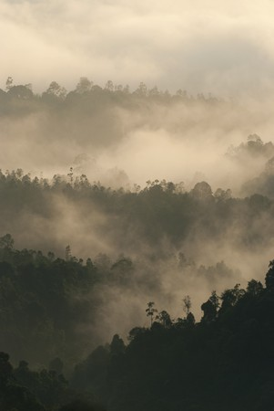 early in the morning misty tropical forest  photo