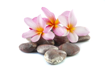 frangipani flower isolated on stack of rocks photo