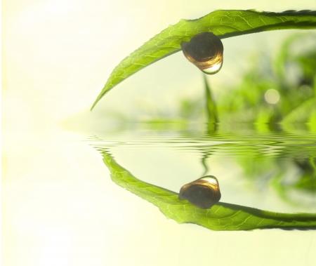 Caracol en hojas de té con luz solar mañana reflexionar sobre la reflexión de Rocío y Lago Foto de archivo