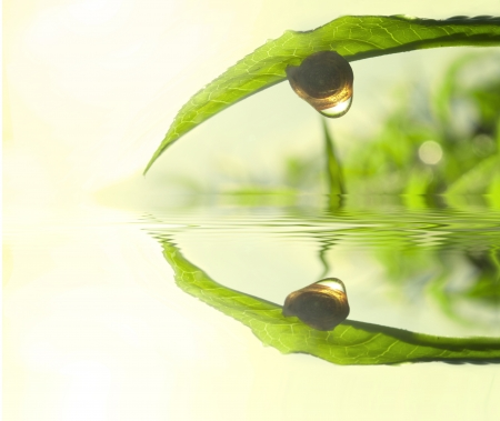 Snail on tea leaf with morning sunlight reflect on dew and lake reflection Stock Photo