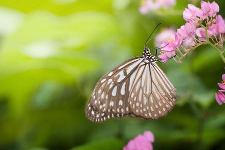 butterflies flying: mariposa sobre fondo verde natural Foto de archivo
