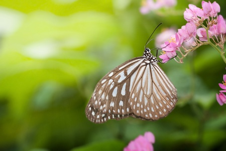 papillon sur fond naturel vert Banque d'images