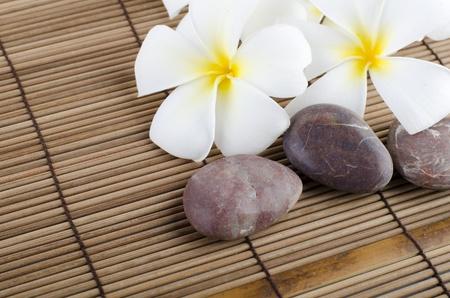 frangipani on stock of rocks photo