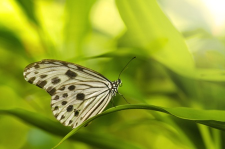 close up photo of butterfly with ray of lights photo