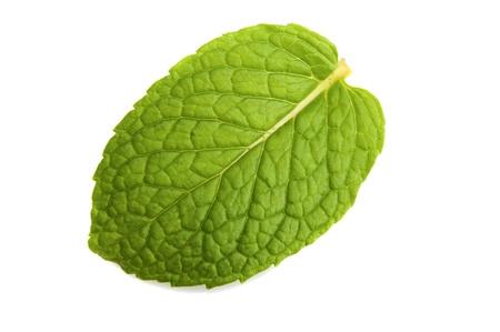 Macro isolé de feuilles de menthe fraîche