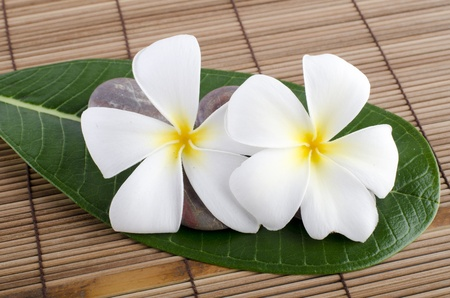 White frangipani and therapy  photo