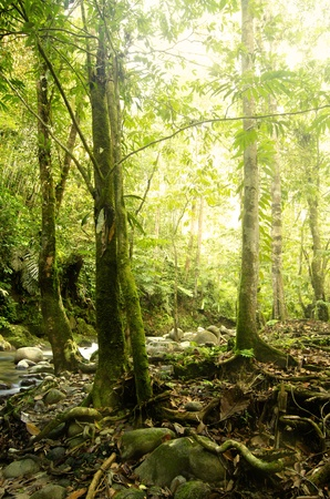 green forest with ray of lights Stock Photo - 9626879
