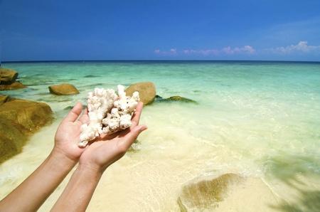 lang: hand holding corals on beautiful lang tengah beach, malaysia