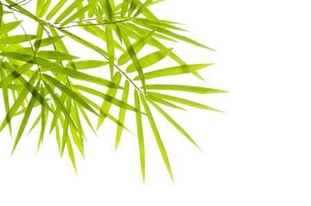 bamboo with isolated white background  photo
