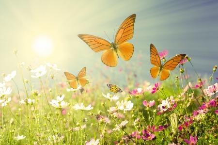 campo de flores: flores de verano con el cielo azul Foto de archivo