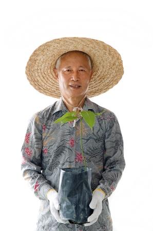 asian gardening: asian senior male plantation worker