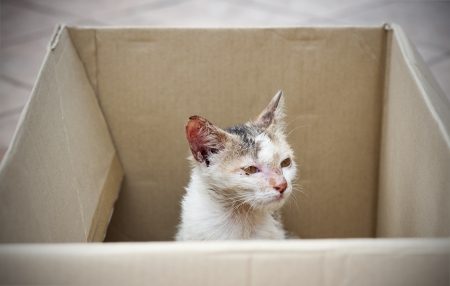 rescued: diseased stray cat being rescued