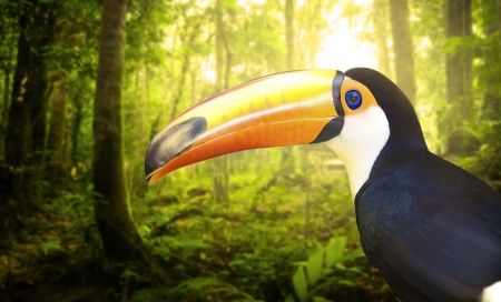toucan withrain forest with fogs and misty lights early in the morning photo
