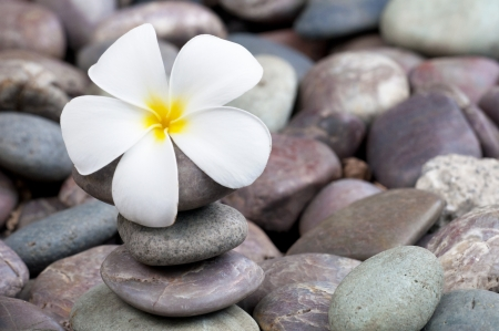 frangipani flower: frangipani on a stack of rocks  Stock Photo