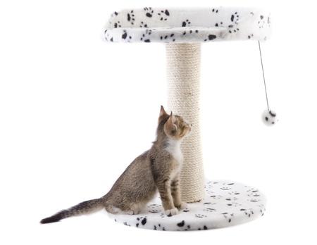 gato jugando: gato que juega con el juguete de la casa