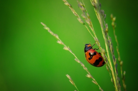 lady bird: close up of ladybird with natural green background