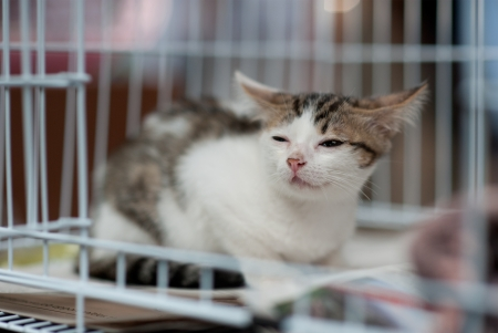 rescued: stray sick cat being rescued   Stock Photo