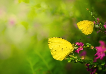 summer butterfly with flowers during sunrise with copyspace photo