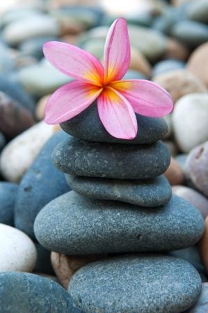 spa rocks: frangipani on  pebbles and rocks for spa purpose