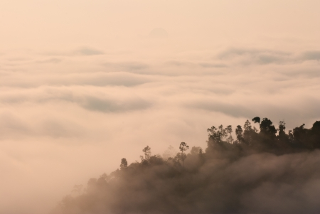 pahang: foggy tropical forest landscape in malaysia