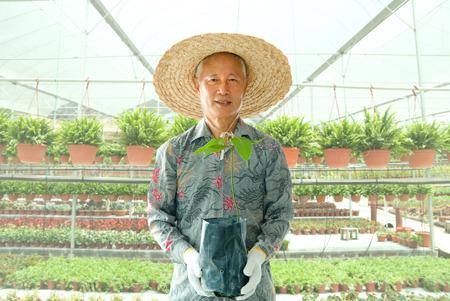 asian gardening: asian senior male farmer in workplace
