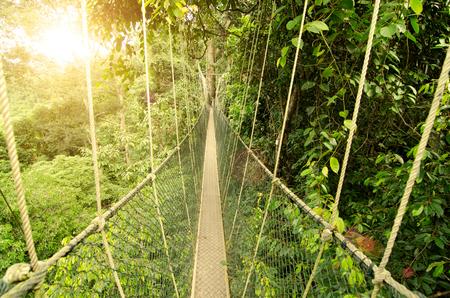 taman: canopy bridge in taman negara, malaysia
