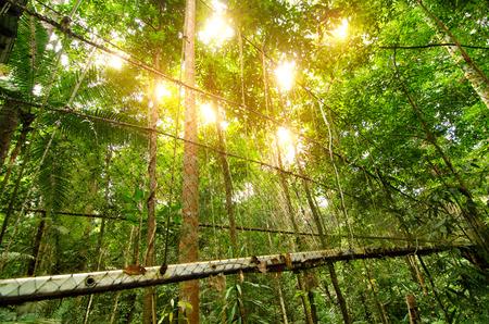 canopy bridge in taman negara, malaysia Stock Photo
