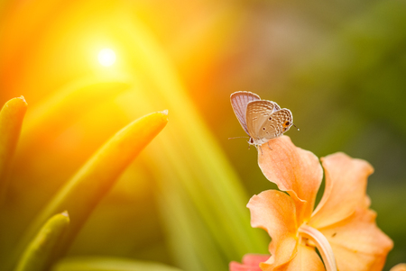 butterfly early in the morning