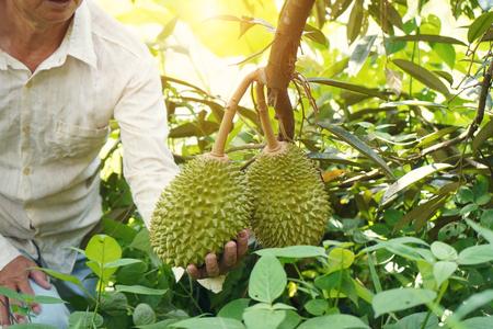 farmer at durian farm Stock Photo