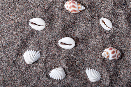 Seashells lying in the sand. Drawing of shells. Summer time. Beach and sand. Relax on the beach.