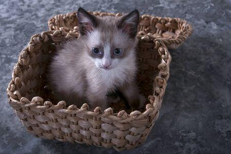 Little playful kitten. Cute, fluffy pet, a favorite of the family. The kitten is sitting in a wicker basket.
