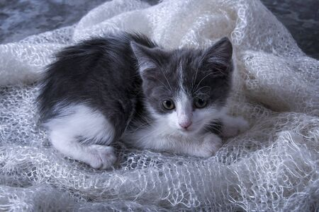 Little playful kitten. Cute, fluffy pet, a favorite of the family. The kitten lies on a downy, soft scarf.