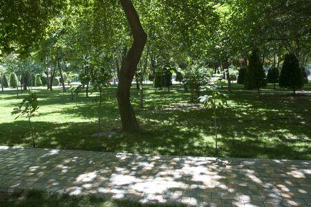 Green park for walks. A cozy park for walks in the fresh air. Foto de archivo