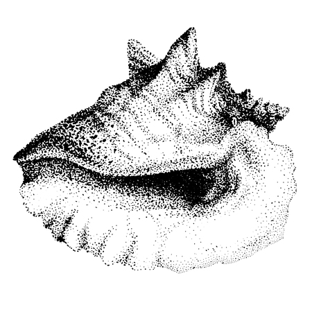 Illustration with Big Seashell on the White Background.