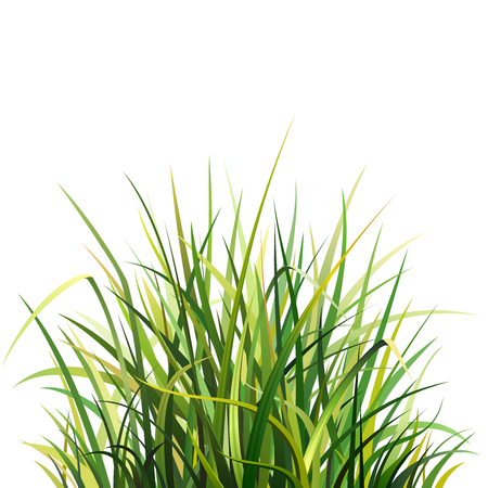 grass blades: Illustration with Big Green Grass, Isolated on White Background Illustration