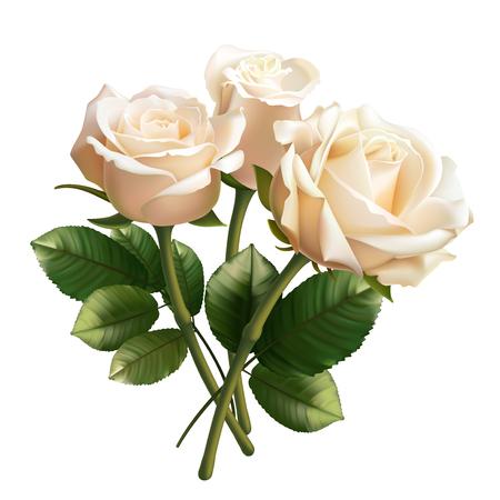 흰색 배경에 고립 된 현실적인 흰 장미입니다.
