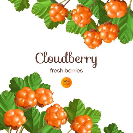 Banner with Cloudberry on white background. Design with place for text. Illustration