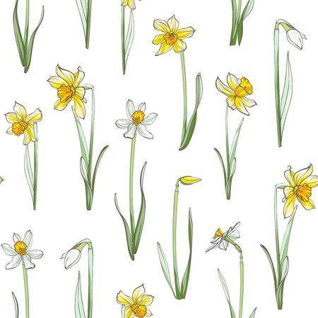 Seamless floral pattern on white background. Hand-drawn flowers - Daffodil.