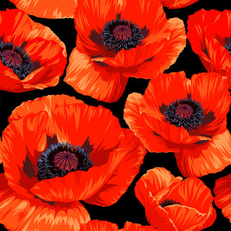 Seamless pattern with red Common Poppy (Papaver rhoeas) flowers isolated on black background. Spring illustration.