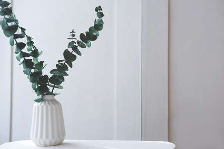 eucaliptus leaves in a white vase on a table. fresh and minimal style concept. clean and uncluttered room. scandinavian design.