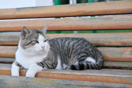homeless old cat lying on a bench in public park. cute cat with damaged eye. pet adoption and vet clinic concept