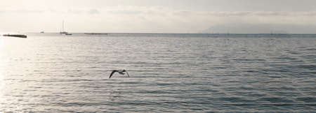 seagulls flying over the sea. banner size. gray evening landscape on sunset. lonely seagull flies low over the water. selective focus.