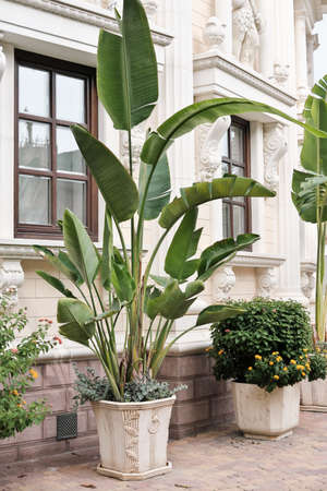outdoor plants in pots near the beautiful building. palm in a planter and various flowers growing in the flower pots in the street, gardening concept. vertical photo